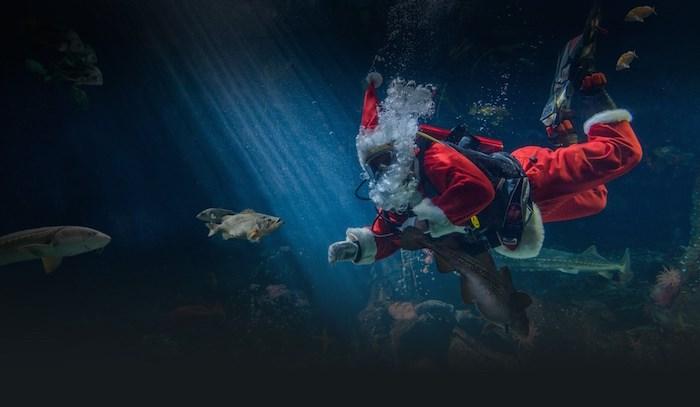 Visit Scuba Claus at the Vancouver Aquarium from Nov. 24 to Jan. 7.