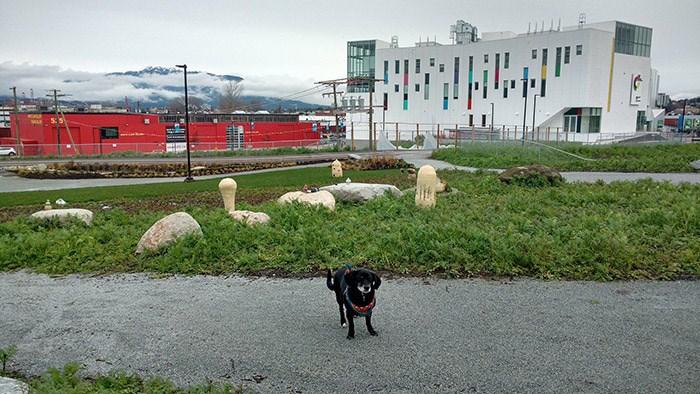 Levee the pup. at Emily Carr Photo: Jennifer Chernecki