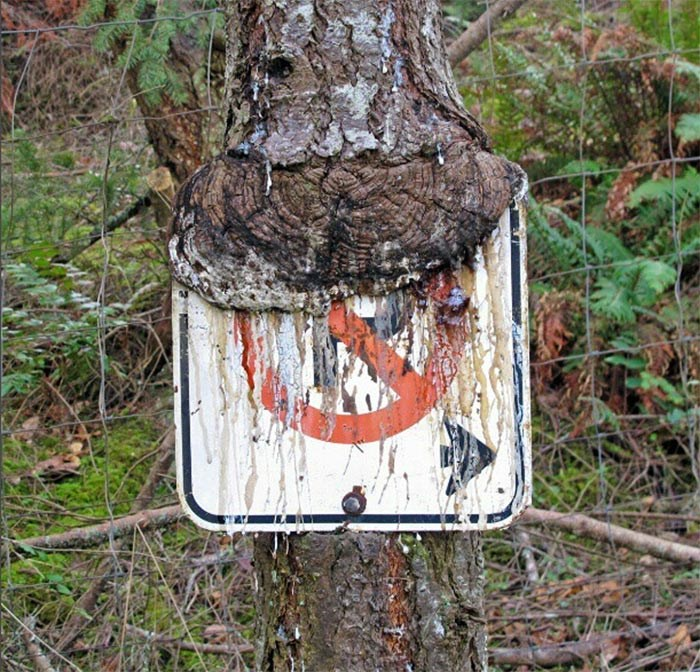 Tree eating a sign in 2013.