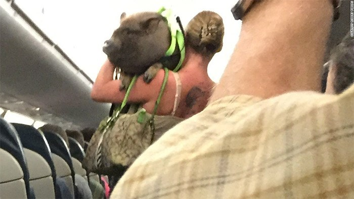 Passenger Robert Phelps took this picture after a passenger was asked to leave a US Airways flight with her