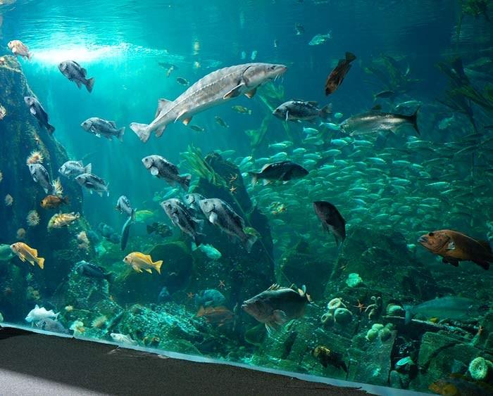 Strait of Georgia. Photo: Vancouver Aquarium