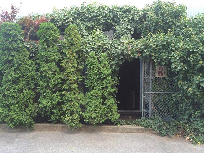 Jay's ivy covered studio is the first stop on the ROVE map this year.