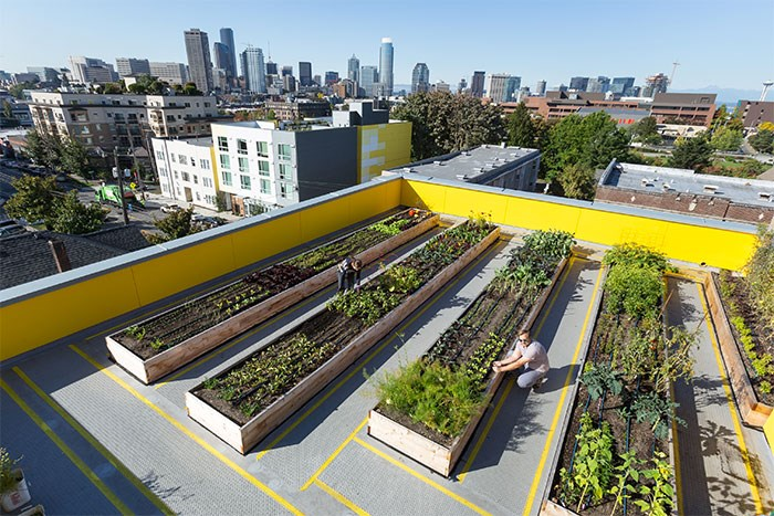 The rooftop garden at Capitol Hill Urban Cohousing in Seattle. Photo William Wright Photography