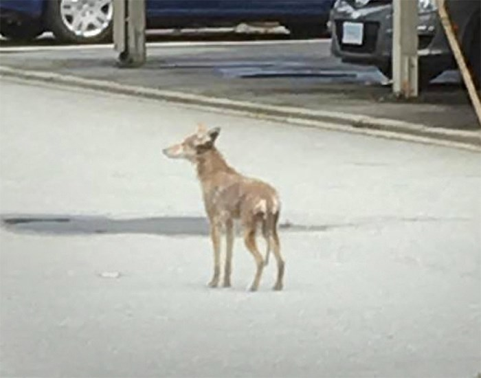 A coyote was destroyed after attacking a three-year-old boy in the Sperling-Broadway neighbourhood of Burnaby Tuesday.