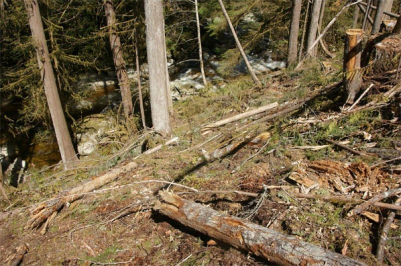 A photo showing an area where ELF claims trees have been cut too close to a stream in the Chapman watershed.