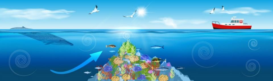Seamounts - DFO graphic
