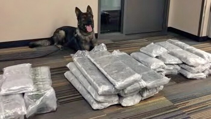 Hooper from the Lower Mainland Integrated Police Dog Services sniffed out suspected drugs at YVR on June 22, 2018, according to Richmond RCMP.