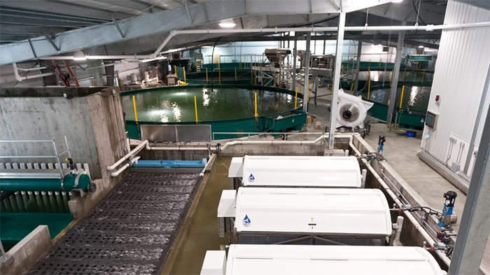 In operation for five years now, Kuterra produces 300 tonnes of salmon per yearin a closed-containment system. | Submitted