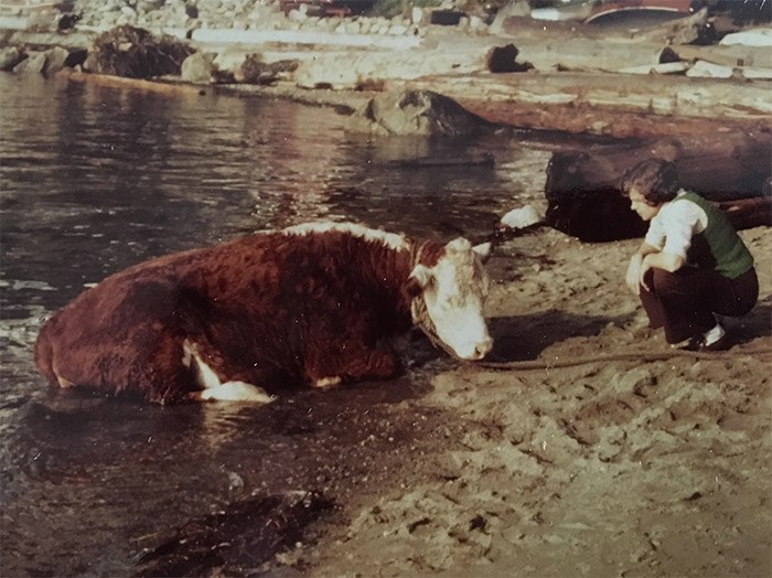 A West Vancouver resident trying to calm a cow coming to shore in September 1976. Photo Jean Lawrence