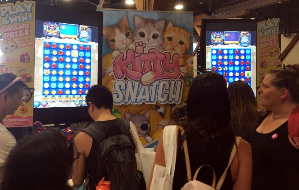 A cat-themed game Photo Melissa Shaw