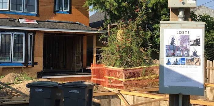 The removal of a 65-plus-year-old Douglas fir upset a number of East Vancouver residents who've started a petition to seek penalties against a developer and builder. Photo Grant Lawrence