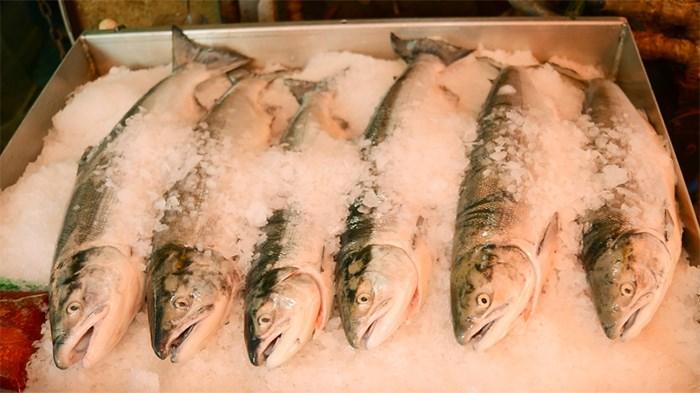Sockeye salmon for sale at the wharf in Steveston. Photo Richmond News