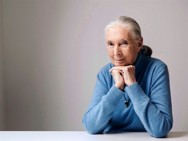 Famed conversationist Jane Goodall will be among the special guests at this year's Vancouver International Film Festival. British primatologist, ethologist, and anthropologist Jane Goodall poses for a portrait to promote the Disneynature film,