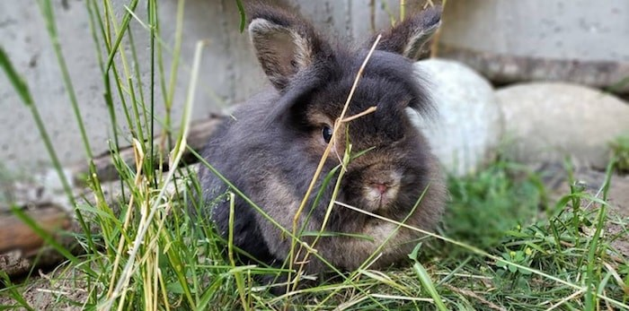 Rabbitats says the new sanctuary will be able to comfortably house 400 rabbits. Photo: Facebook/SAINTS Rescue