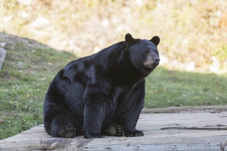 Bear/Shutterstock