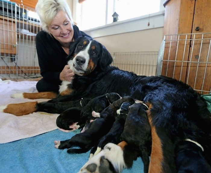 Pretty Girl and puppies (Adrian Lam/Times Colonist)