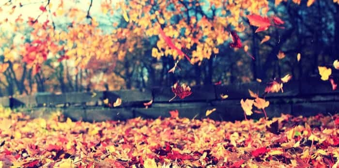 Photo: Leaves falling on ground / Shutterstock