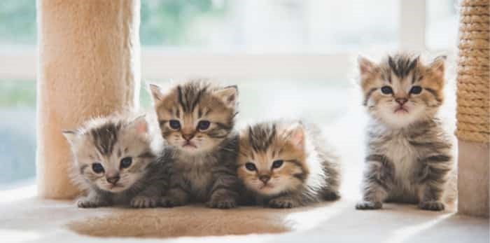Photo: kittens / Shutterstock