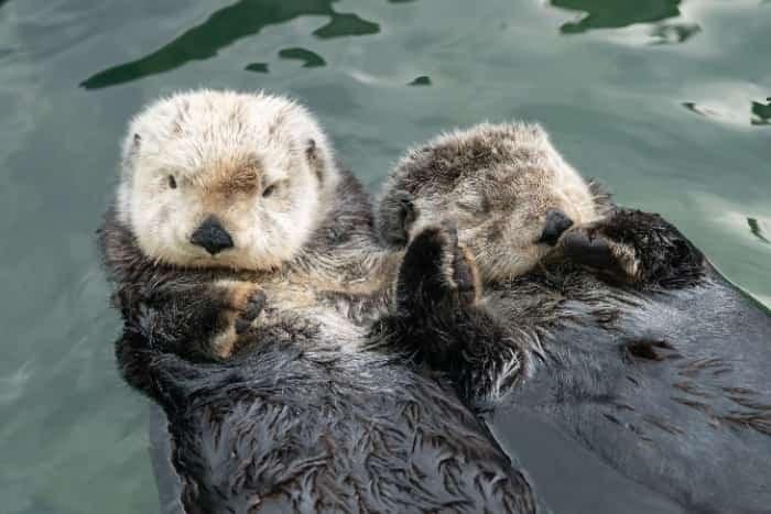 Photo: Vancouver Aquarium