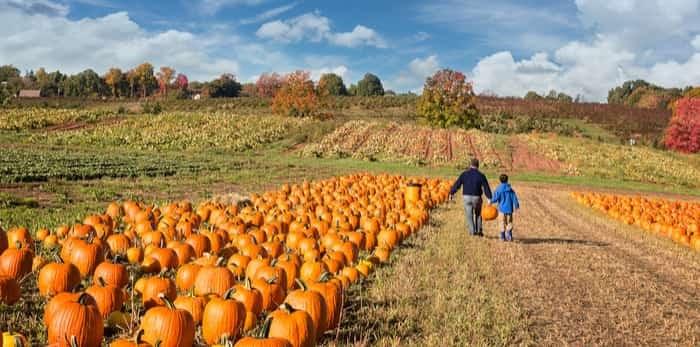 Photo: pumpkin patch kid / Shutterstock