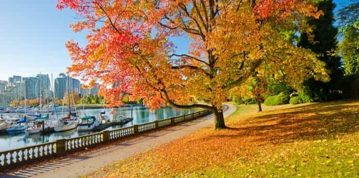 Photo: Fall foliage Vancouver