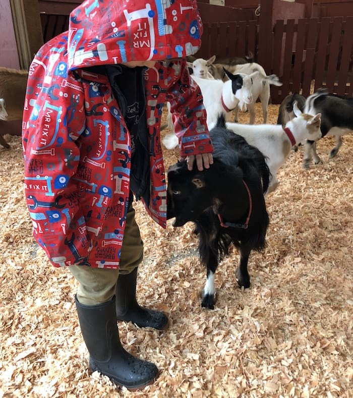 Kids and kids at heart can pet the kids in the goat pen at Beacon Hill Children's Farm (Lindsay William-Ross/Vancouver Is Awesome)