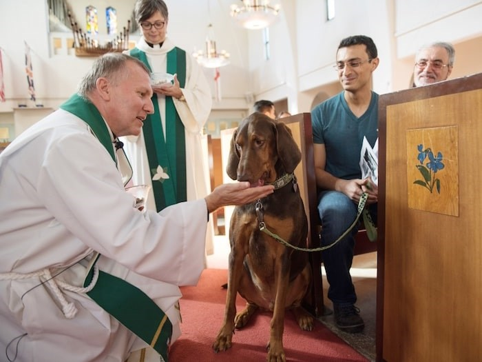 St. John's Shaughnessy archdeacon John Stephens and reverend Liz Hamet gave Cody the Doberman coonhound communion in the form of a treat while owner Ali Zahedi looked on during the 2016 Blessing of the Animals ceremony. Photo by Rebecca Blissett