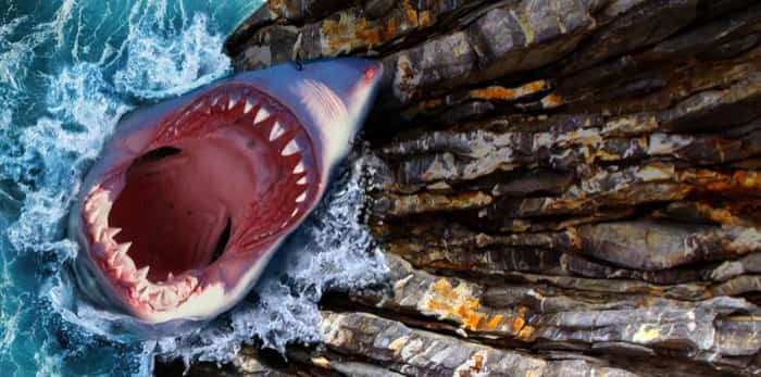Photo: shark jump / shutterstock