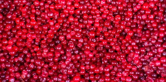 Photo: Cranberries galore / Shutterstock