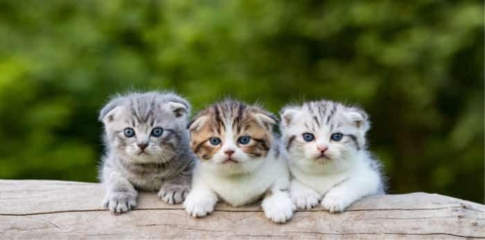 Photo: kittens on a log / Shutterstock