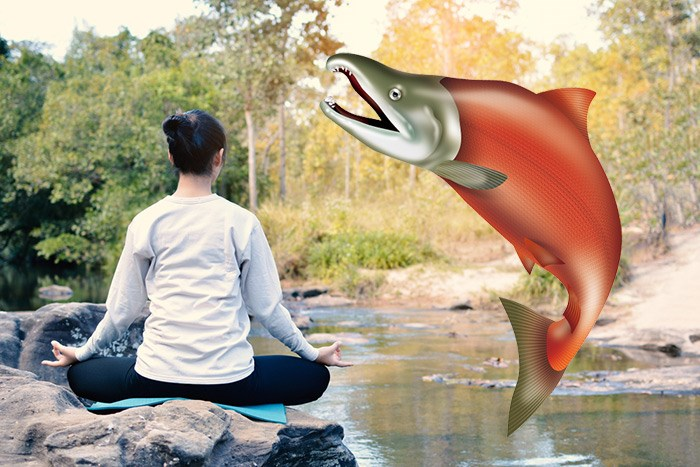 Salmon yoga is a thing now. Photo Shutterstock