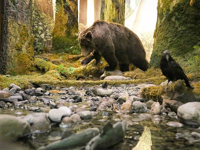 A grizzly bear, a raven and some salmon in one of many stunning displays in the Natural History exhibit at the Royal BC Museum. Photo Bob Kronbauer