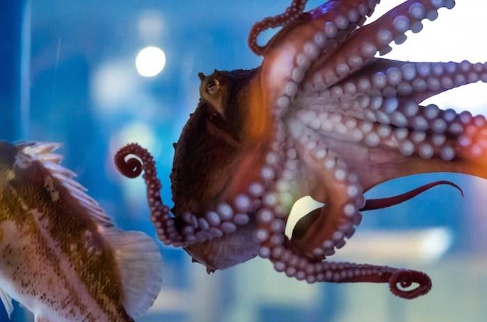 Photo courtesy Vancouver Aquarium