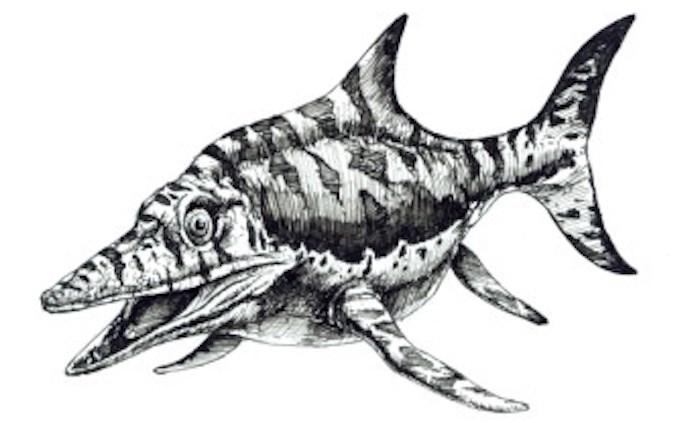 Is your favourite fossil the Icythyosaur? (Image via SurveyMonkey)