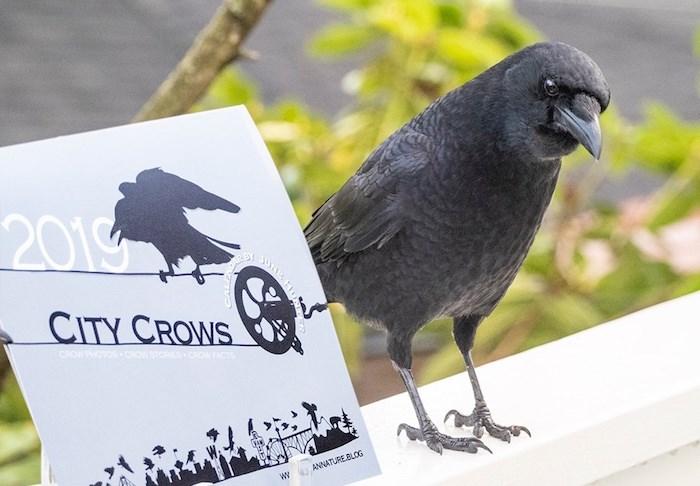 The City Crow Calendar and model (Photo courtesy June Hunter)