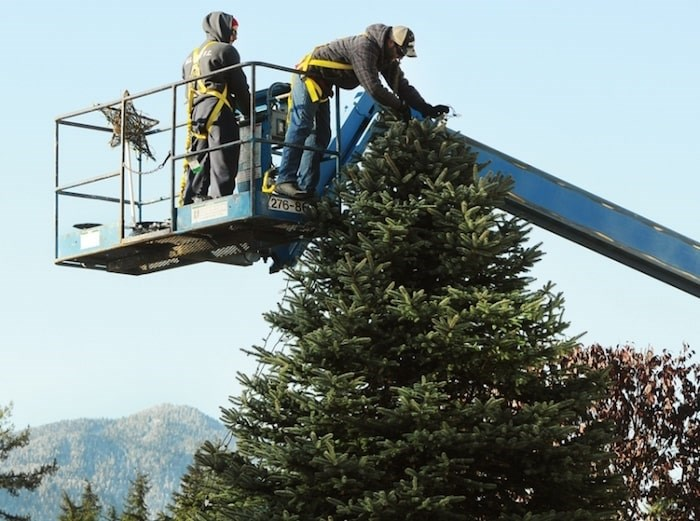 Ethan Ribalkin and brother-in-law Aaron Senetza hang more than 1,000 feet of Christmas lights and decorations on the spruce tree in front of the family home at 4967 Chalet Place last year. file photo Cindy Goodman