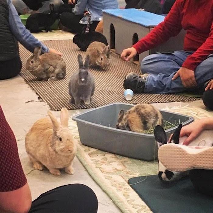 Photo courtesy Rabbitats/Catfe