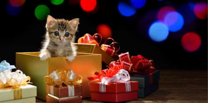 Funny kitten coming out of a gift box with bokeh background of Christmas lights / Shutterstock