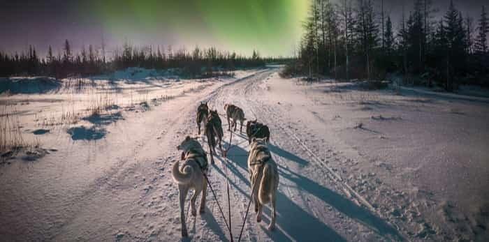 dog sledding under the northern lights / Shutterstock