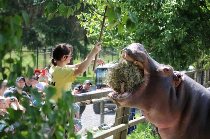 Greater Vancouver Zoo /