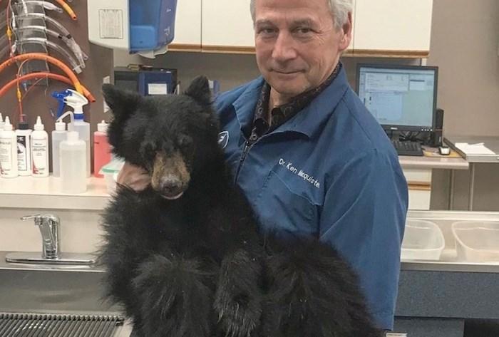 Black bear cub Hickory with Dr Ken Macquisten. Photo via Critter Care Wildlife Society.