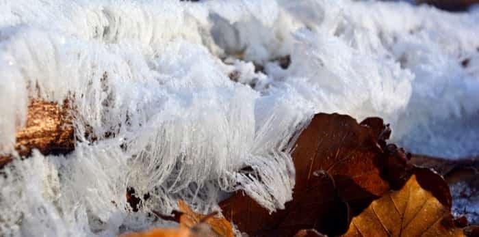 Ice hair on a dead branch / Shutterstock