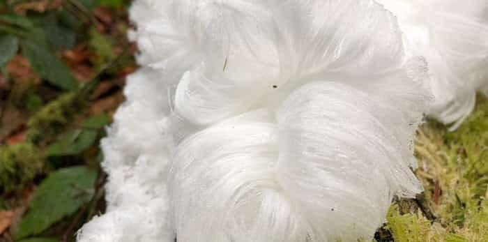 Mysterious Hair ice / Shutterstock