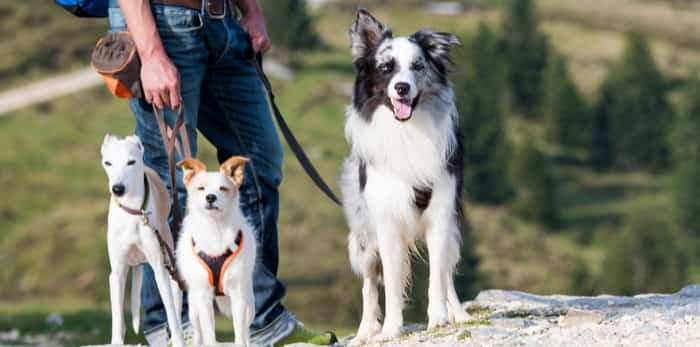 Hiking with dogs / Shutterstock