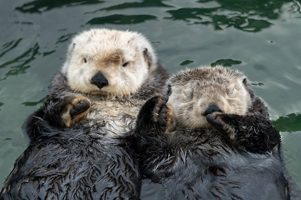 Couple Goals. Photo Courtesy Vancouver Aquarium