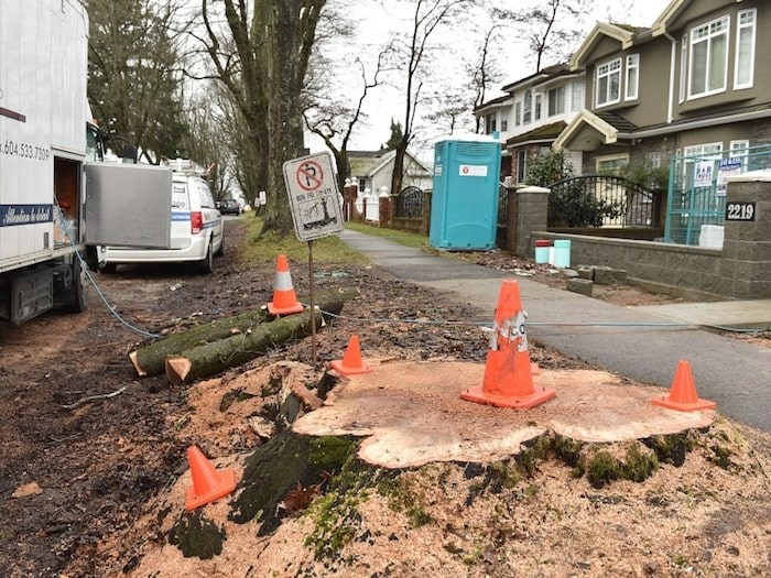 One resident raised concerns over the recent removal of two large oak trees on East 43rd Avenue. Photo Dan Toulgoet