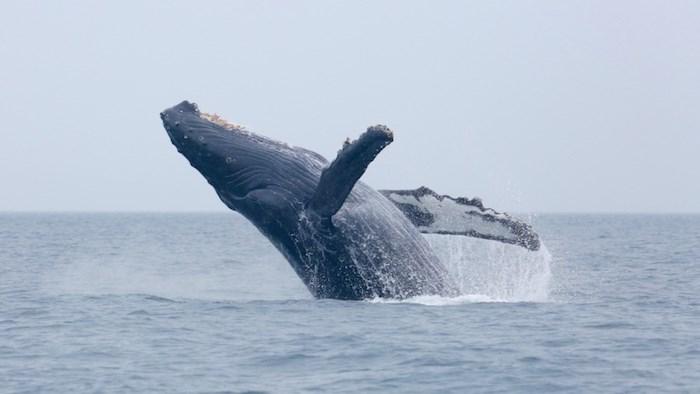 Whale/iSTOCK