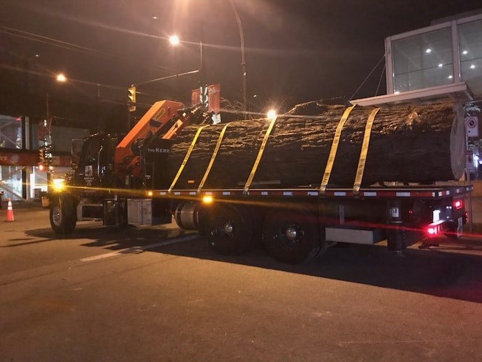 The trunk of a massive sequoia tree removed from West 41st Avenue in Kerrisdale March 3. Photo courtesy TPMG Capital