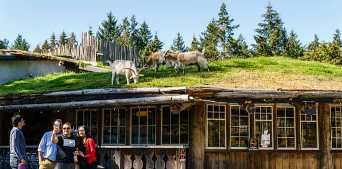 Coombs, CANADA - September 02, 2018: Goats on roof at Old Country Market on Vancouver island. / Shutterstock