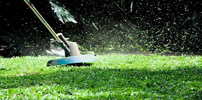 'Tis the season for seasonal allergies. Grass is one of the most common allergens in Greater Vancouver.